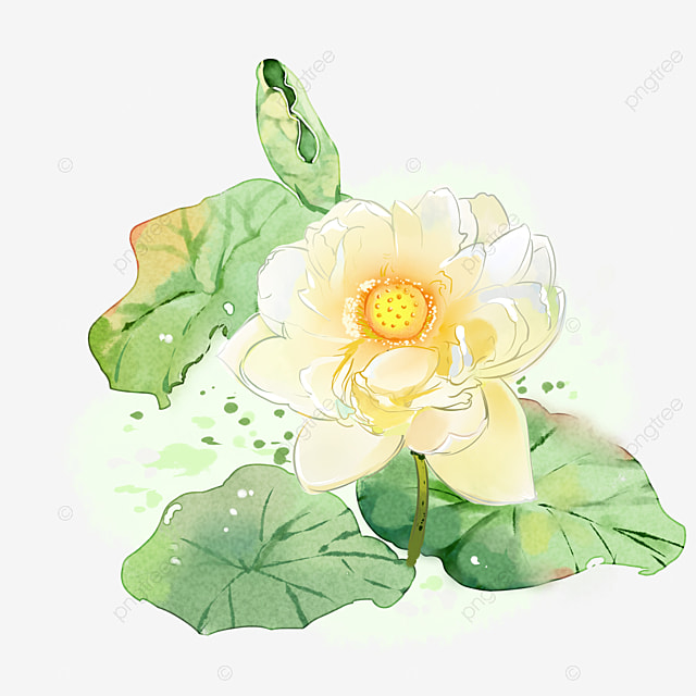 Bohemia Watercolor Flower Png Transparent Image And