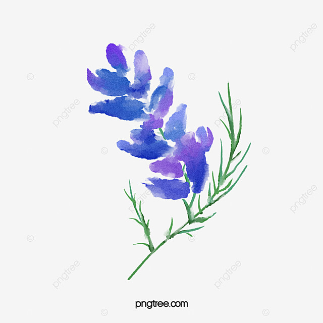 Transparent background floral botanical watercolor flowers - High resolution watercolor flowers ...