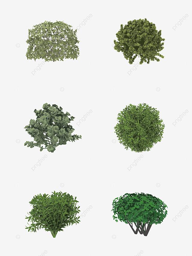Arbusto Planta Sotobosque Verde Imagen Png Para Descarga Gratuita