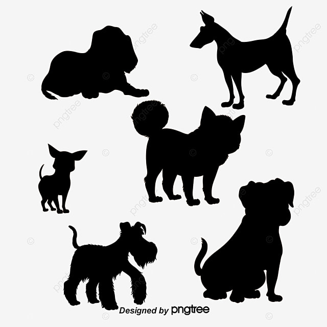 Dog Show Video Download