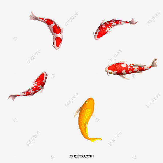 Koi carp fish png image and clipart for free download for Fraie carpe koi