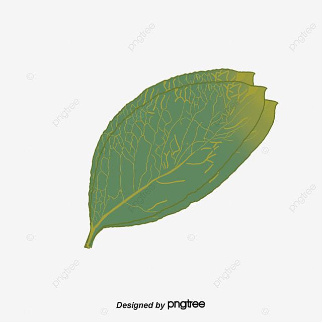 Hojas de rboles textura de hoja hojas rojas hojas verdes for Arboles de hoja perenne en galicia