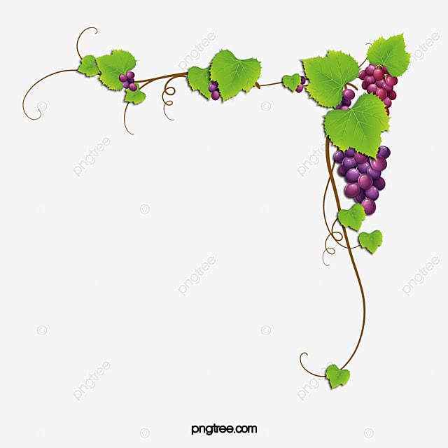 quadro com moldura ramos da videira uva ramos timbo png