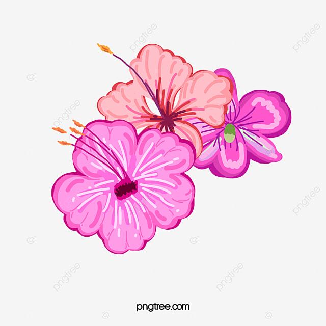 de petites fleurs clean summer plante tropicale fleur