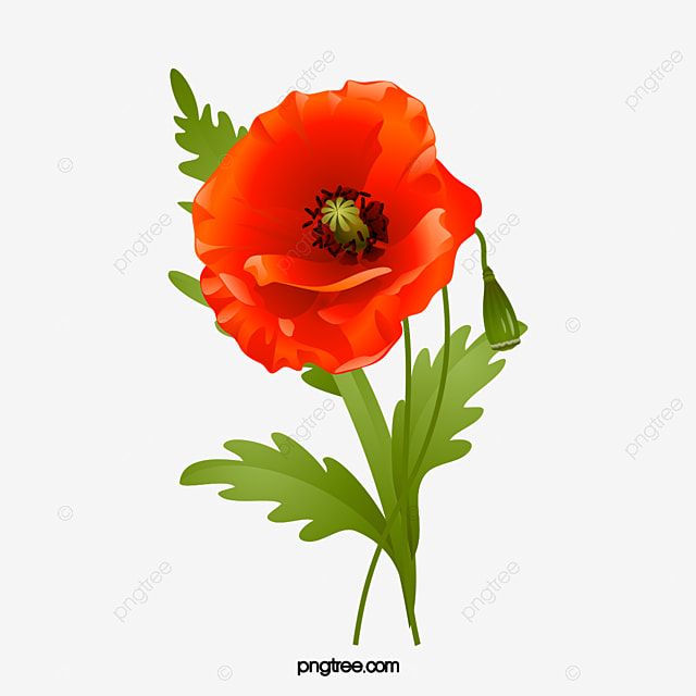 Poppies poppy flower flowering png image and clipart for free poppies poppy flower flowering png image and clipart mightylinksfo