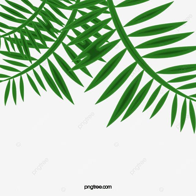 hoja de palma hoja de palma leaf hojas verdes png y vector