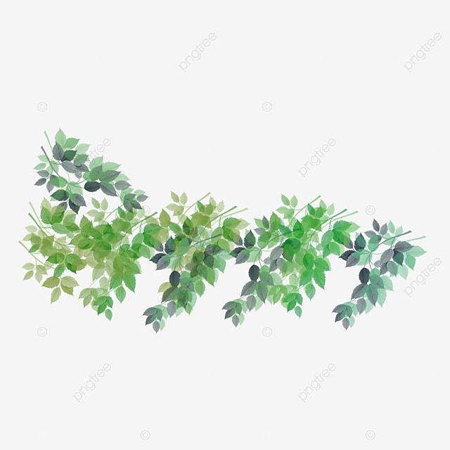 Green vines, Green, Leaf, Vine PNG Image