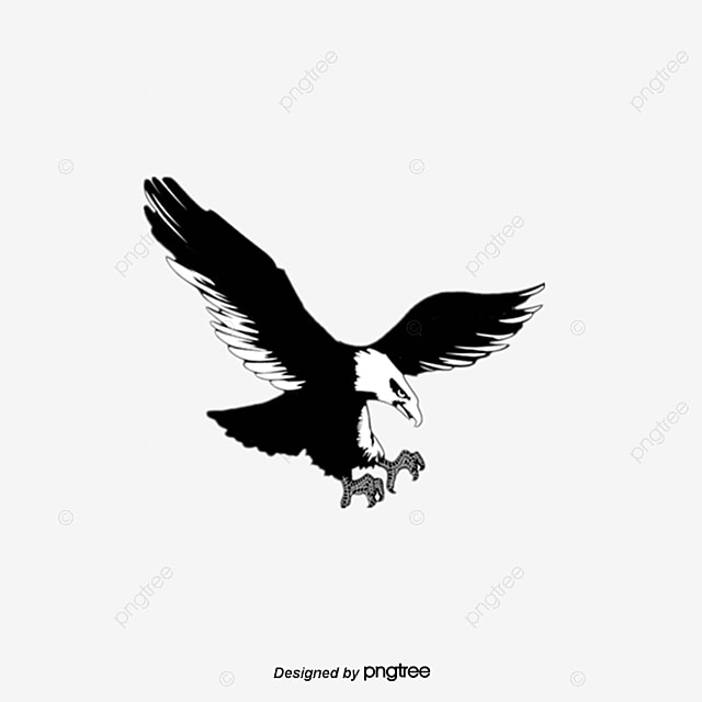Eagle, Fly, Sky PNG Image