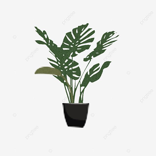les feuilles de la plante en pot les feuilles bonsa u00ef des