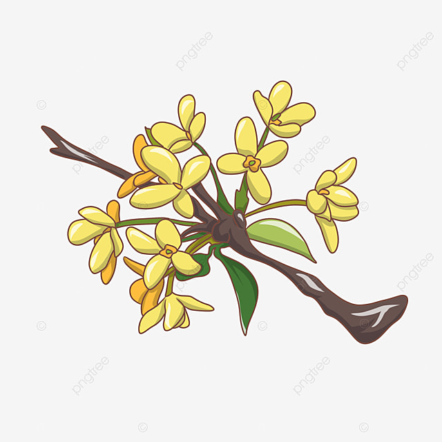 Yellow orchid flowers orchid flowers squid png image and clipart yellow orchid flowers orchid flowers squid png image and clipart mightylinksfo
