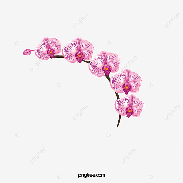 Orchid Flowers, Flowers, Squid, Branches PNG Transparent ...
