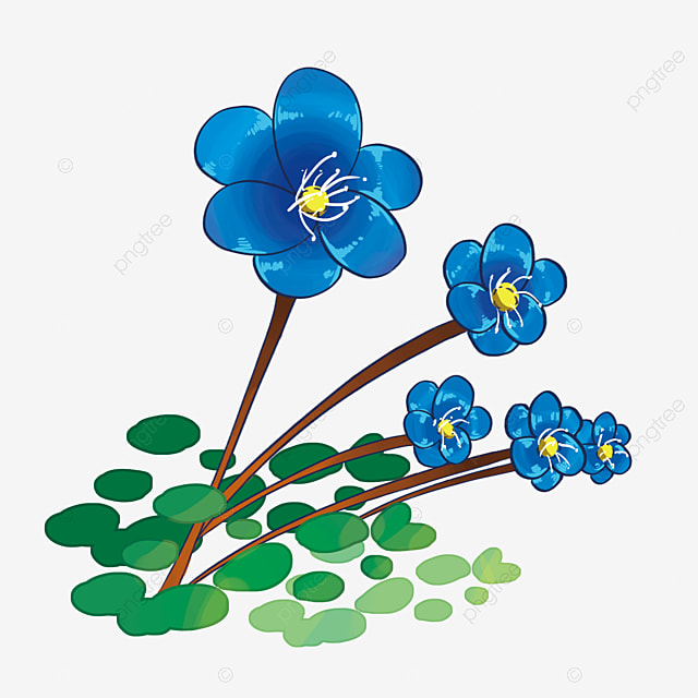 Blue Orchid Flowers, Squid, Orchid, Blue Orchid PNG ...