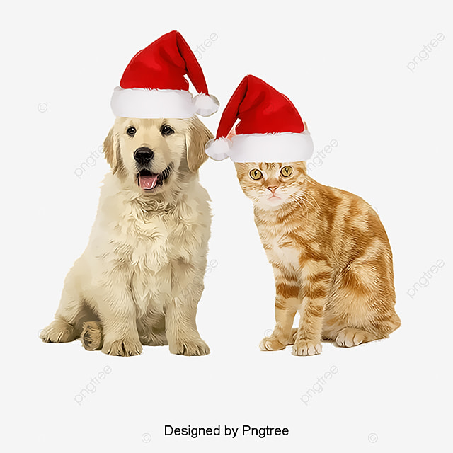 Evidence Cats And Dogs Download