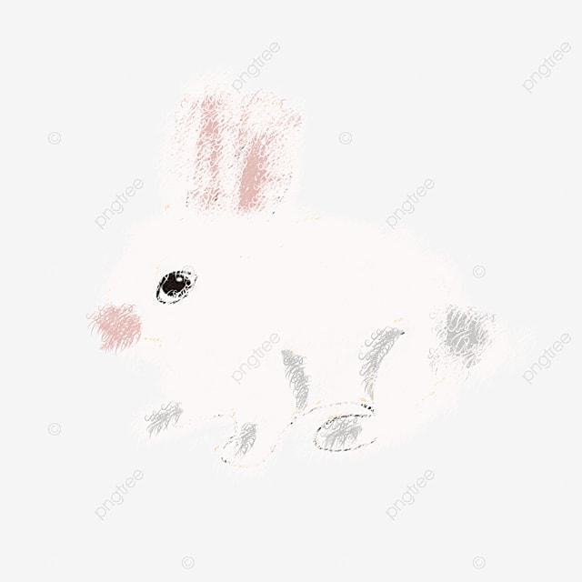 Rabbit Light Colored Rabbit Cute Rabbit Silly Rabbit