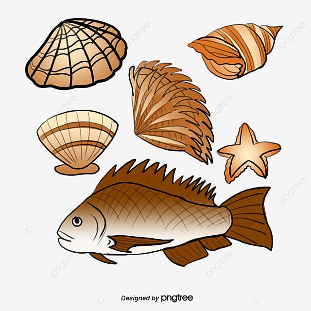 Pescados y mariscos productos en tipo almeja sashimi for Canelones de pescado y marisco