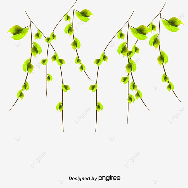 Cartoon Timbo Moos Muster Cartoon Wein Cartoon Moos Cartoon Pflanzen
