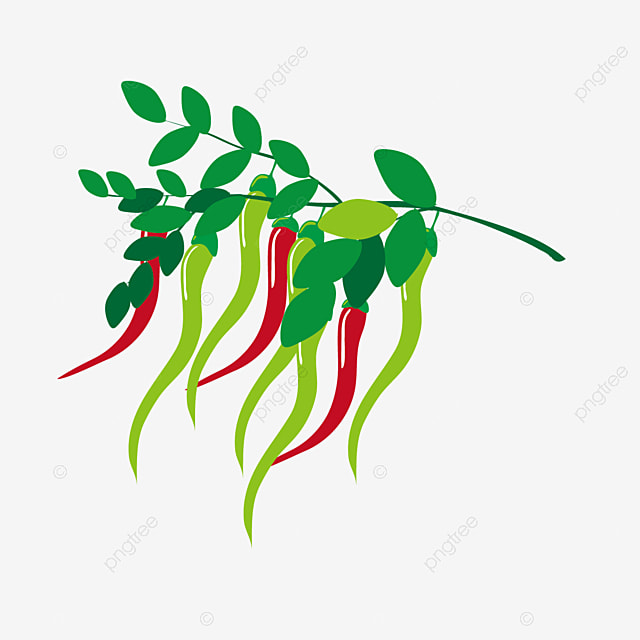 Clipart Pepper Cliparts Galleries