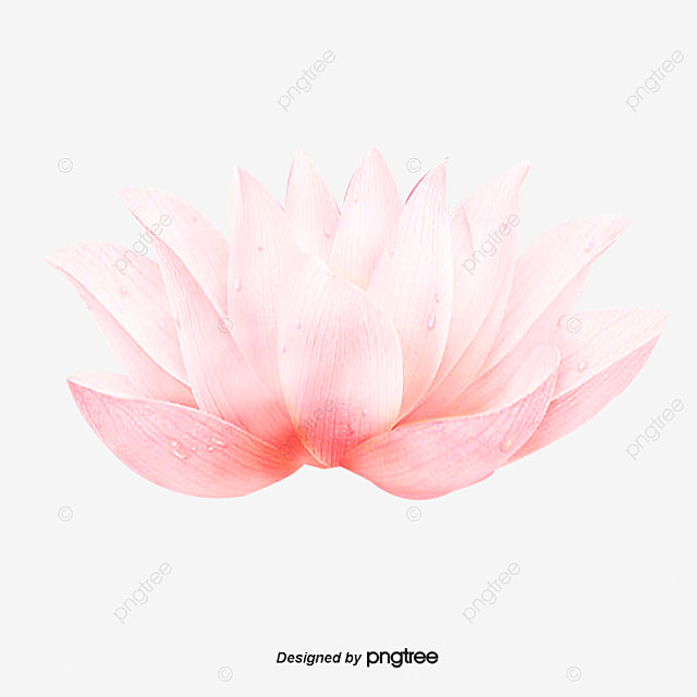 download 5d lotus flower - photo #25