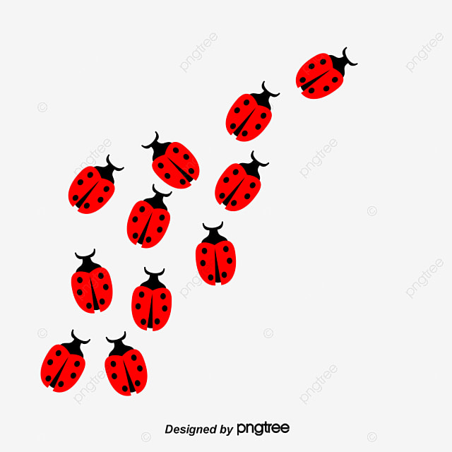 Ladybug bug insect png image and clipart for free download ladybug bug insect png image and clipart stopboris Images