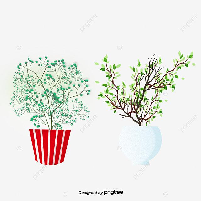Evergreens Aus Topf Pflanzen Blumentopf Porzellan Grüne Pflanzen