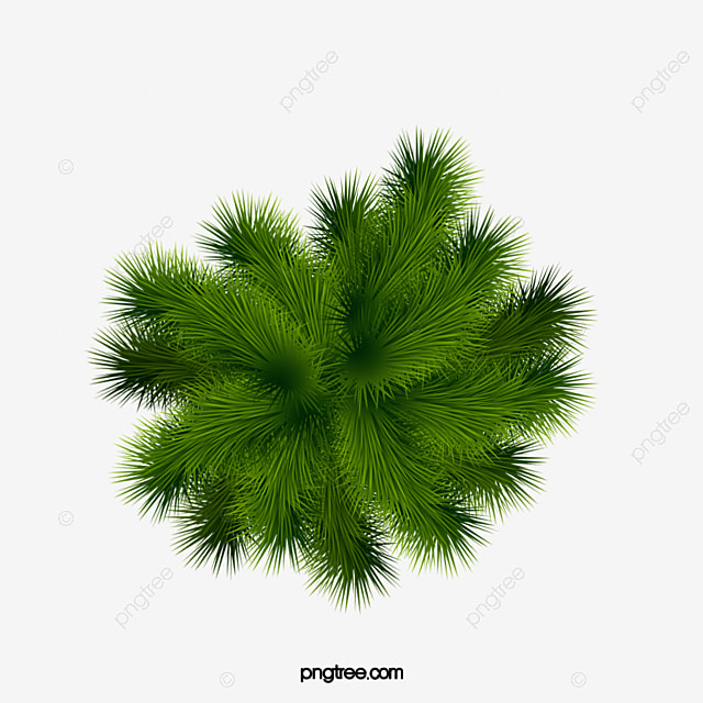 Palm Tree Green Plant PNG Image And Clipart
