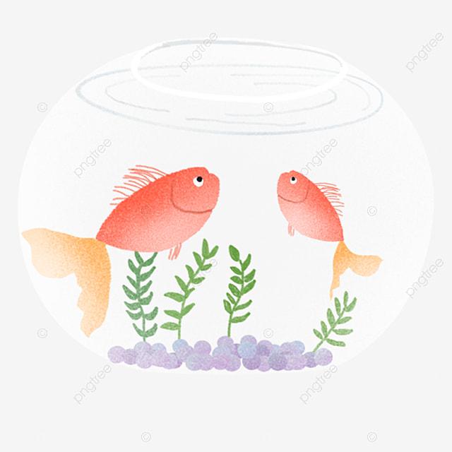Goldfish Jump Out Of The Tank Jump Aquarium Goldfish Png Image