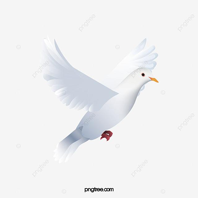 White Doves Png