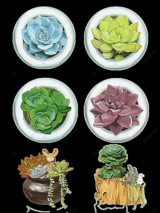 Vector Suculentas, Suculentas, Prickly Pear, Vector Planta PNG y ...