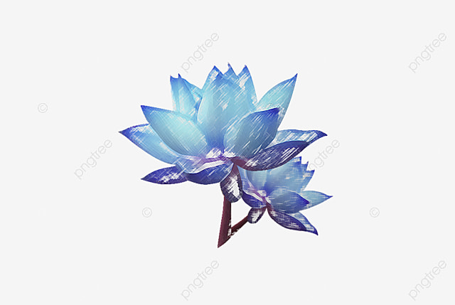 Blue Flowers Watercolor PNG And Vector
