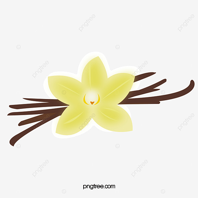 Vanilla Pod, Flowers, Plant PNG And Vector For Free Download
