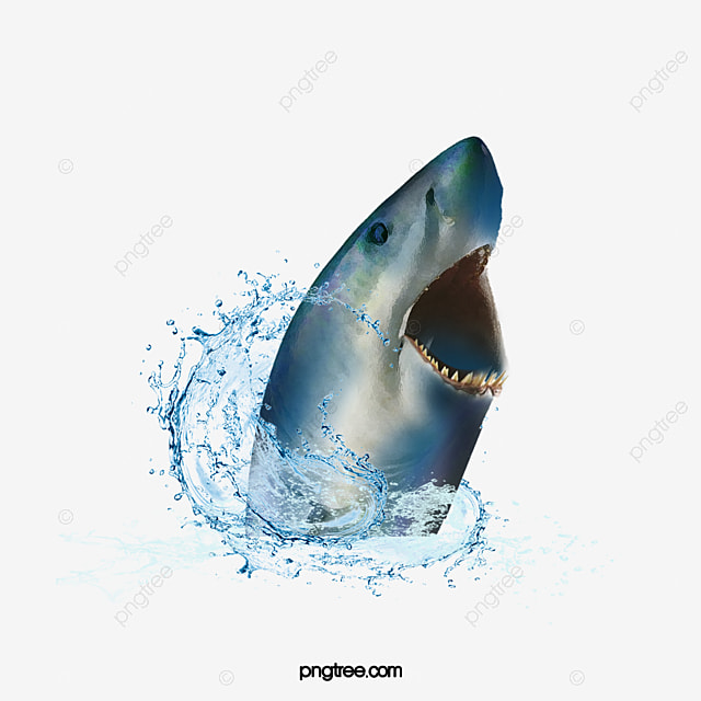 Water Sharks Water Shark Shark Shark Png Transparent Clipart Image And Psd File For Free Download We upload amazing new content everyday! water sharks water shark shark shark