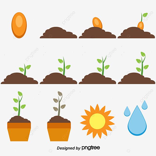El Crecimiento De La Planta, Semillas, Growing Up, En Maceta PNG y ...