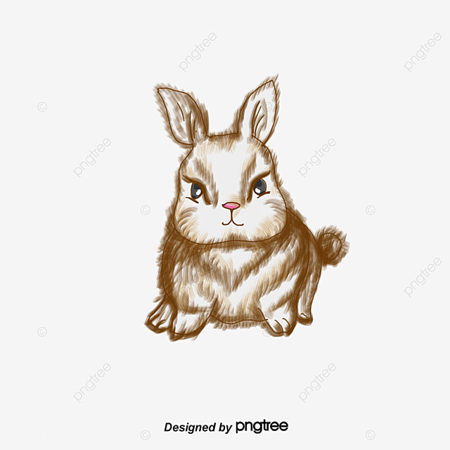 rabbit cartoon png vectors psd and clipart for free download