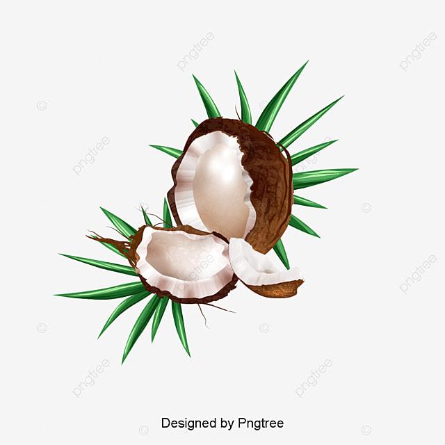 le vecteur de noix de coco noix de coco le dessin de la