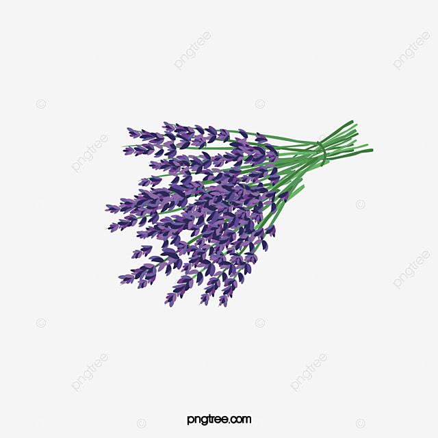 lavender flowers purple flower png image and clipart for free download rh pngtree com free clipart lavender plant lavender flower clip art free