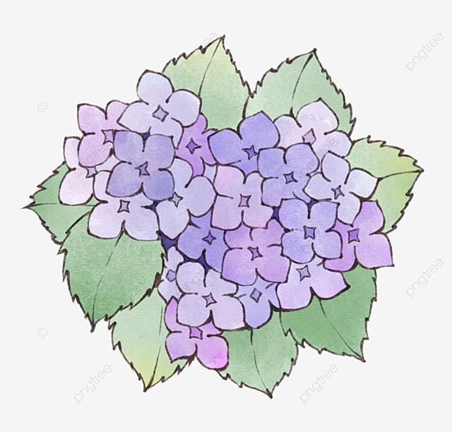 Watercolor hydrangea watercolor clipart spring flower png image watercolor hydrangea watercolor clipart spring flower png image and clipart mightylinksfo