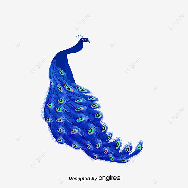 Vector Azul Pavo Real Animales De Dibujos Animados