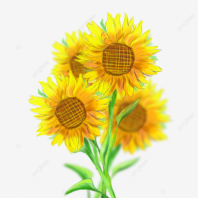 Sunflower Sunflower Clipart Png Image And Clipart For