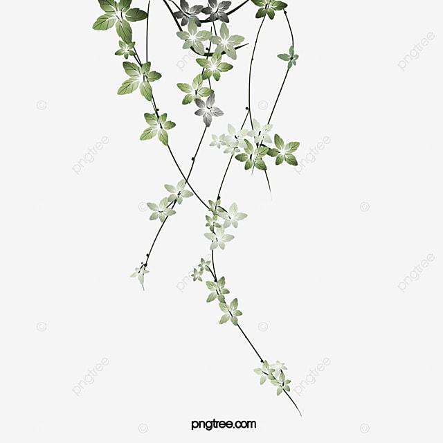 Les feuilles des plantes aquarelle illustration peint for Plante 8 feuilles