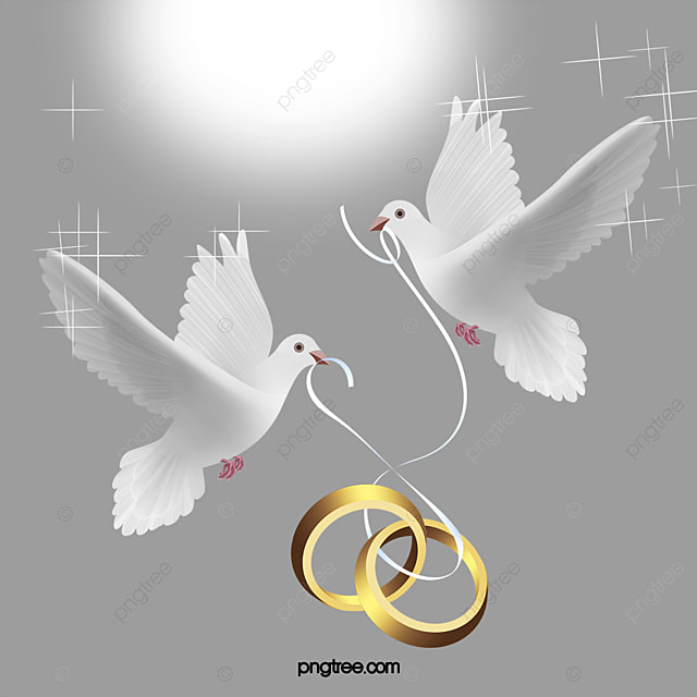 Vector Wedding Ring Hd Pretty Pigeon PNG and Vector for Free Download