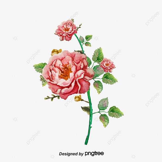 Rose D Illustration A La Main Rose Rouge Bouquet De Fleurs Dessin