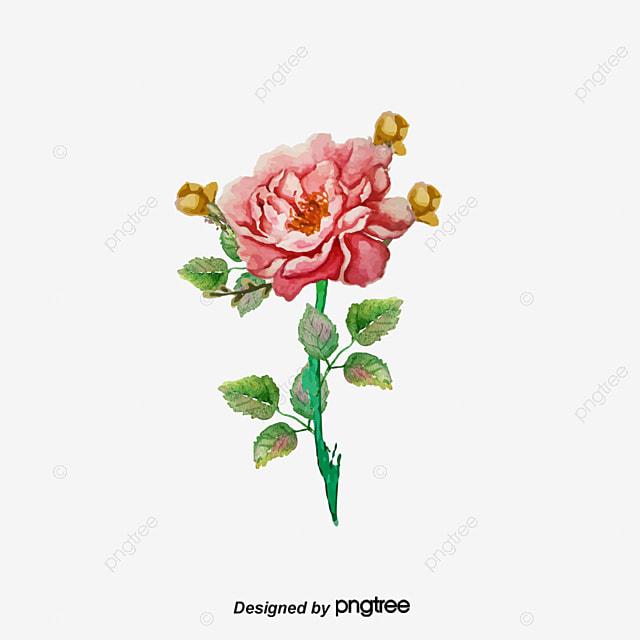 Rose D Illustration A La Main Rose Rouge Bouquet De Fleurs Dessin De