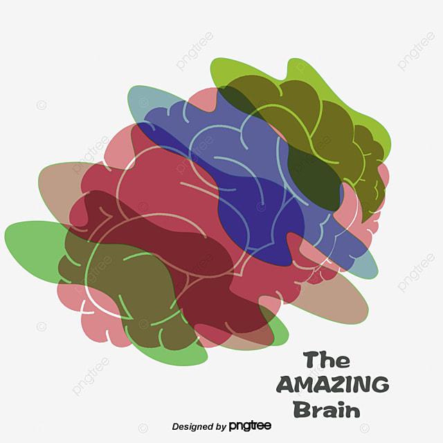 vector colorful brain brain vector colorful brain brain