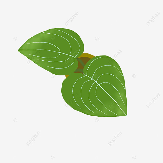 vecteur de feuilles de la plante en forme de coeur de plantes feuilles les feuilles png et. Black Bedroom Furniture Sets. Home Design Ideas