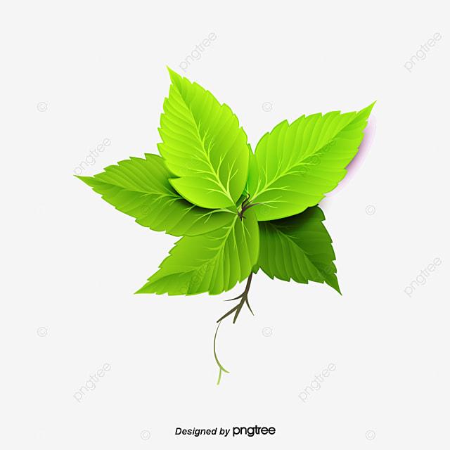 Vector Green Mint Leaves, Green Mint Leaves, Mint Leaf