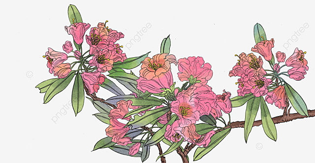 Red Tropical Plants Flowers Plants Clipart Red Tropical Flowers