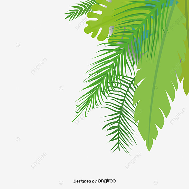 Coconut leaves, Coconut Tree, Leaves, Green PNG Image and ...