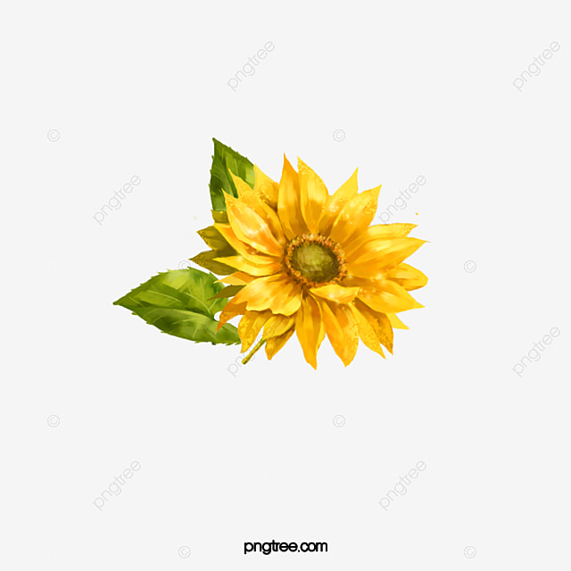 Watercolor Sunflowers Sunflower Yellow PNG Image And Clipart