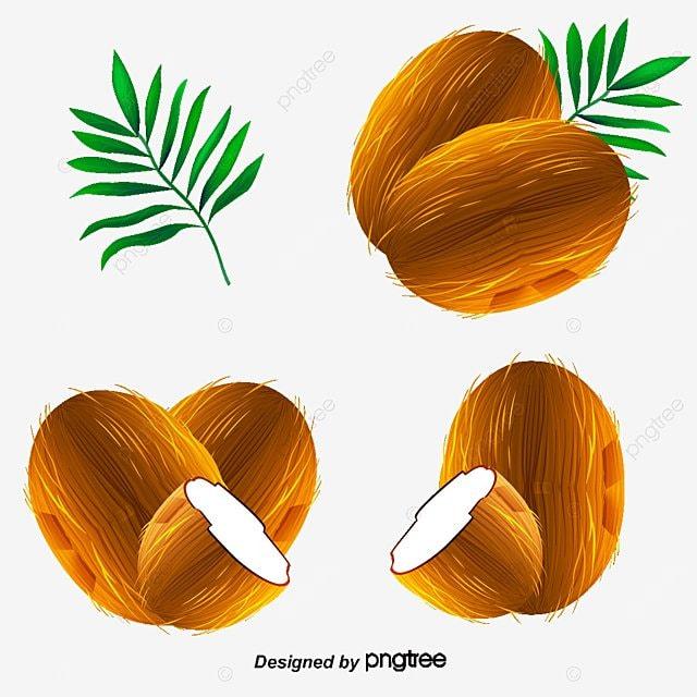 vector cartoon coconut cartoon vector coconut vector