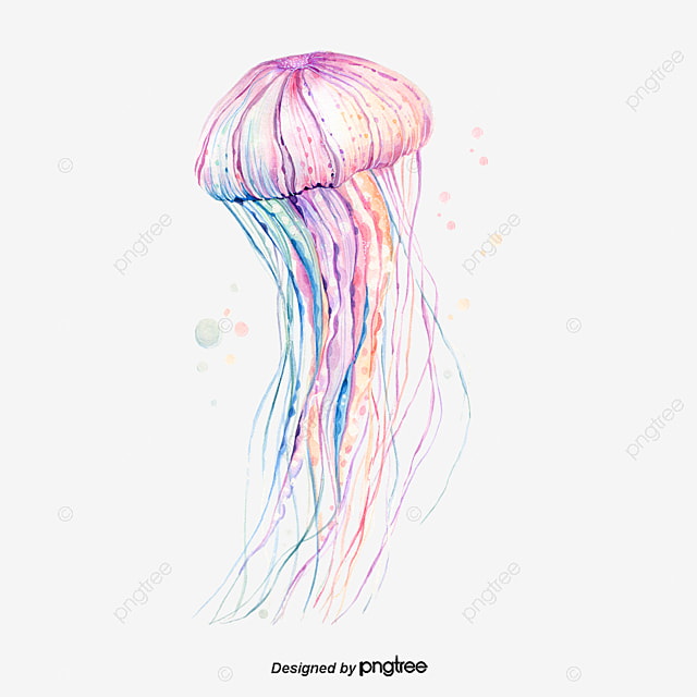 Blue Pink Jellyfish, Marine Life, Sea Creatures, Blue Pink PNG Image ...